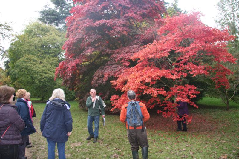 Westonbirt Walk - Thorold lead the group to a tree that looked like it was on fire - it was incredible but wait