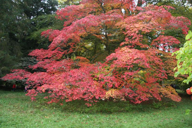 Westonbirt Walk - more colours,