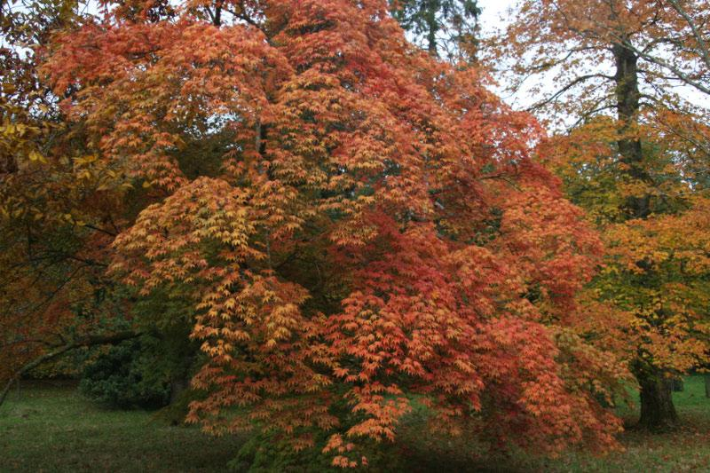 Westonbirt Walk - even more colours and yes