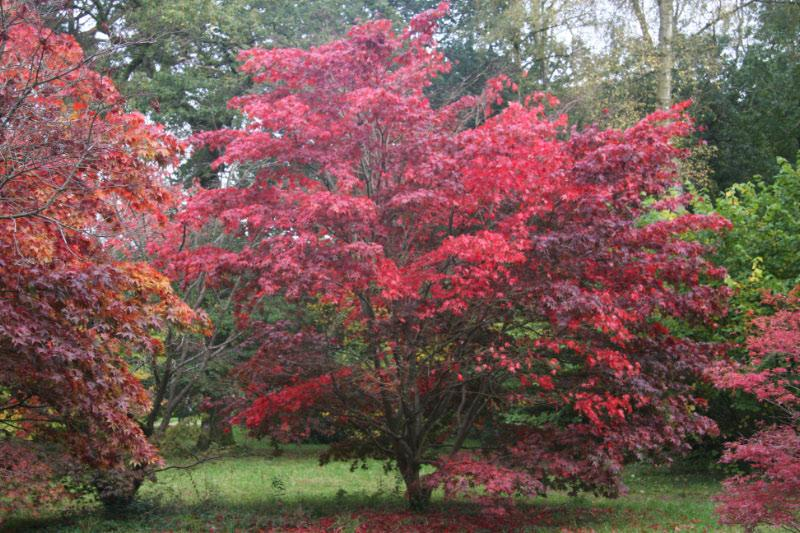 Westonbirt Walk - even more colours it could not get better than this could it?