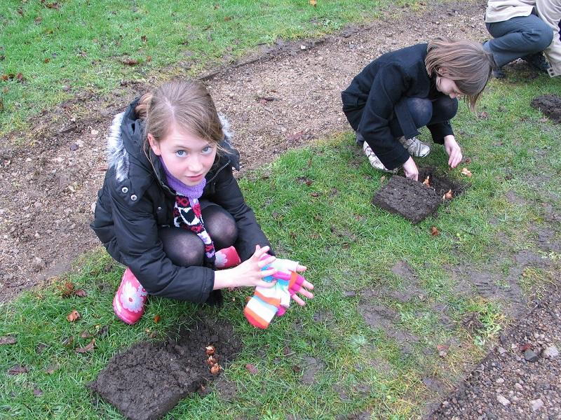 Bulb Planting at the Maze  -