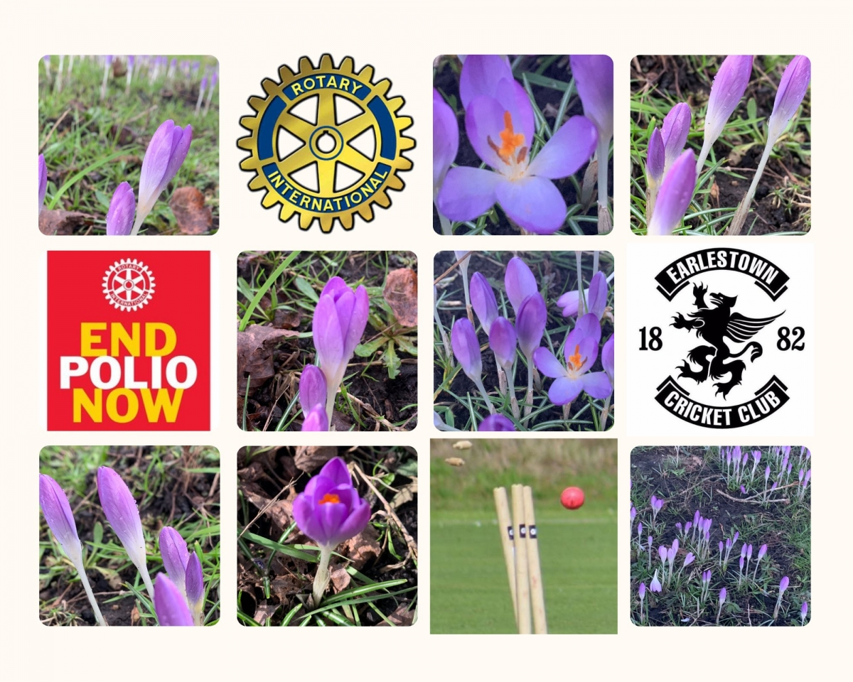 SPRING IS HERE AND SO ARE OUR CROCUSES! - Thanks to Karl Allen