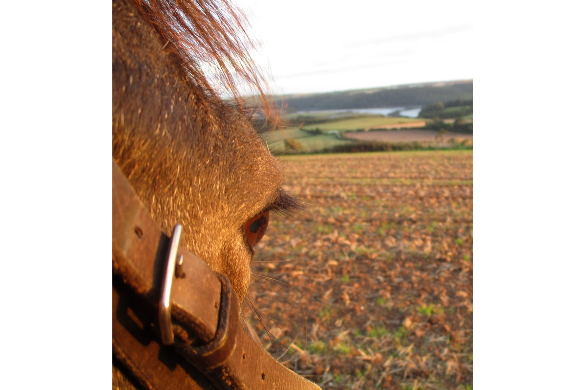 2017-18 Young Photographer Results - I took this on my farm with a point and shoot camera, and this is my horse Bess. I took a picture of her eye and her bridle to show her view of the landscape. I haven't done any editing as I like the colours of this picture.