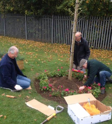 Planting Crocus bulbs at St Andrews Hospice - Planting bulbs around the tree