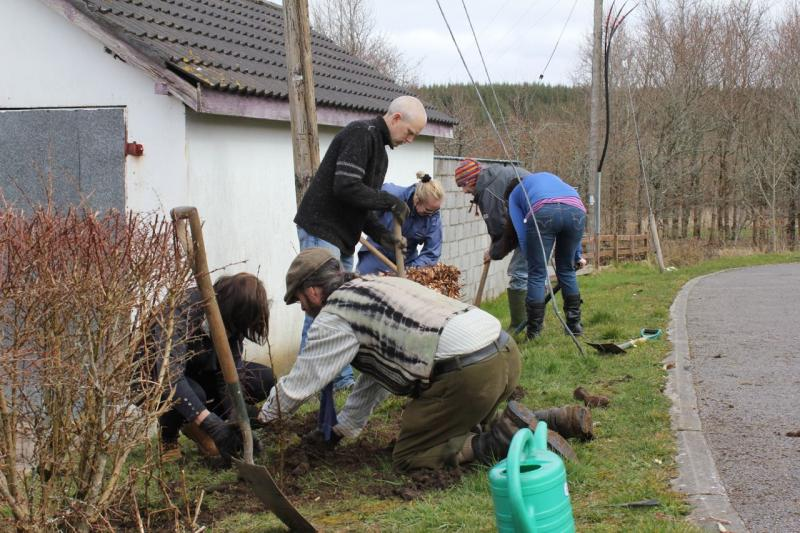 Peace Forest Ireland - Planting a Hedgerow in Kiltyclogher, County Leitrim