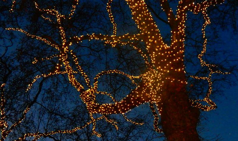 RIBI YOUNG PHOTOGRAPHER COMPETITION - The Christmas lights on trees outside the National History Museum