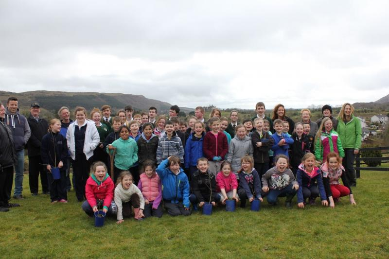 Peace Forest Ireland - St Clare's Comprehensive and Primary School, Manorhamilton