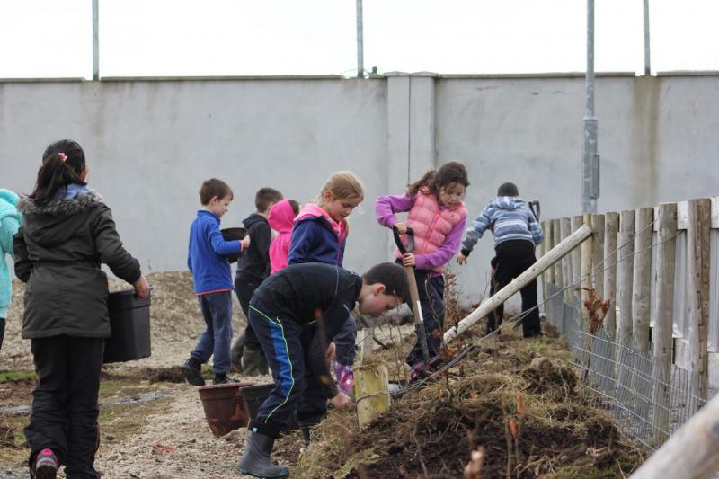 Peace Forest Ireland - Pupils of St Clare's Primary School planting oak trees in their school