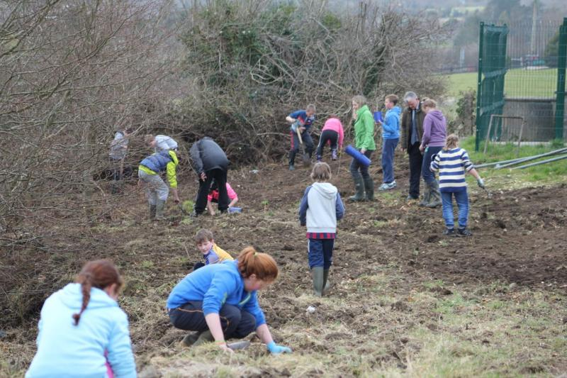 Peace Forest Ireland - Pupils of St Clare's Primary School planting oak trees around the school perimeter