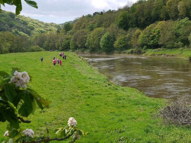 The Wye Valley Walk. May 2012 - P1000641 2