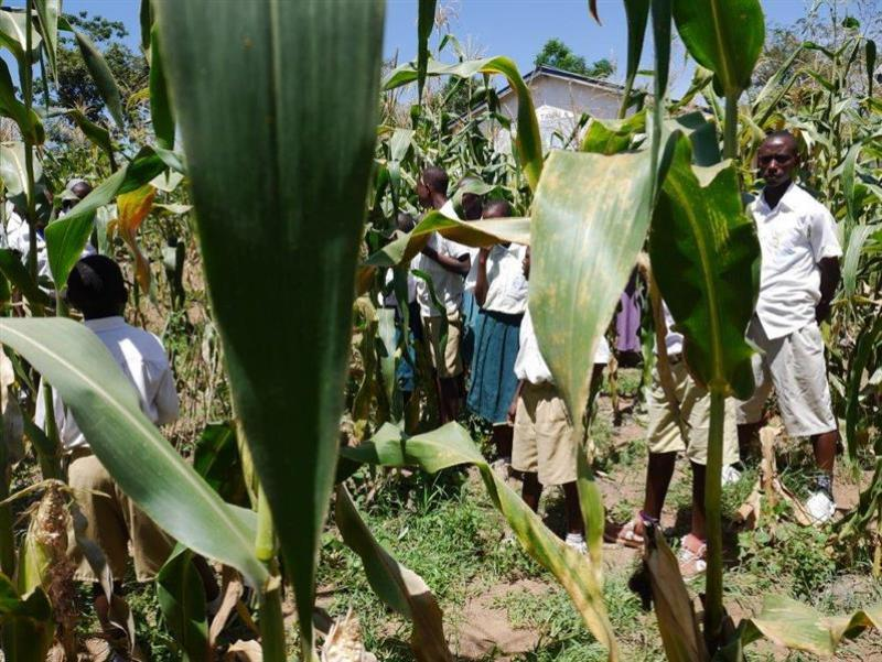Rotary starts farming project in Tanzanian school - Farming project in Tanzania