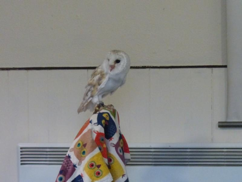 Club Meeting + Guest speaker Anita talking about Vocation - Mango the Barn Owl