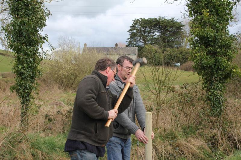 Peace Forest Ireland - Putting in the supports for the Poplar trees.