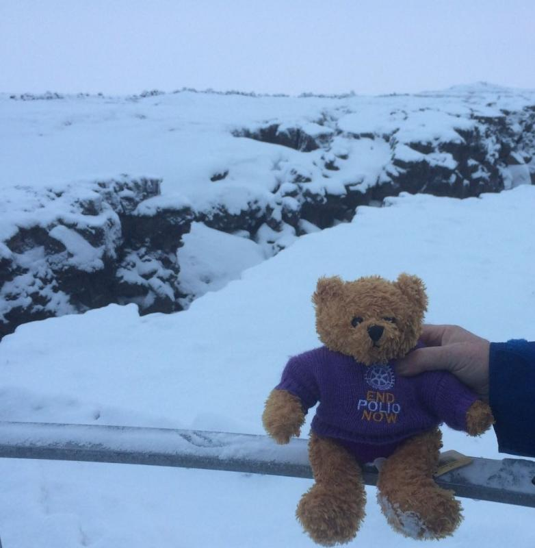 Rotary Polio Bear  - Our Pauline Bear braving the cold in Iceland