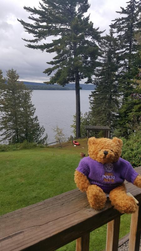 Rotary Polio Bear  - Pauline Bear overlooking the lake at Rangeley, Maine USA