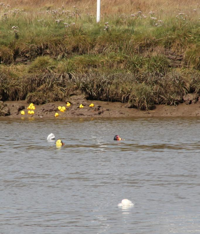 Kirkcudbright Rotary Duck Race - Photo finish