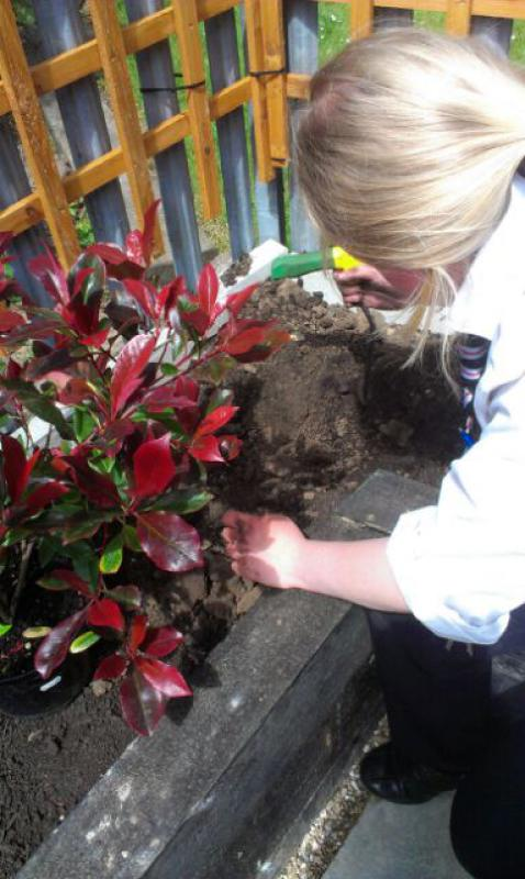 Hartsdown College Project - Planting 002
