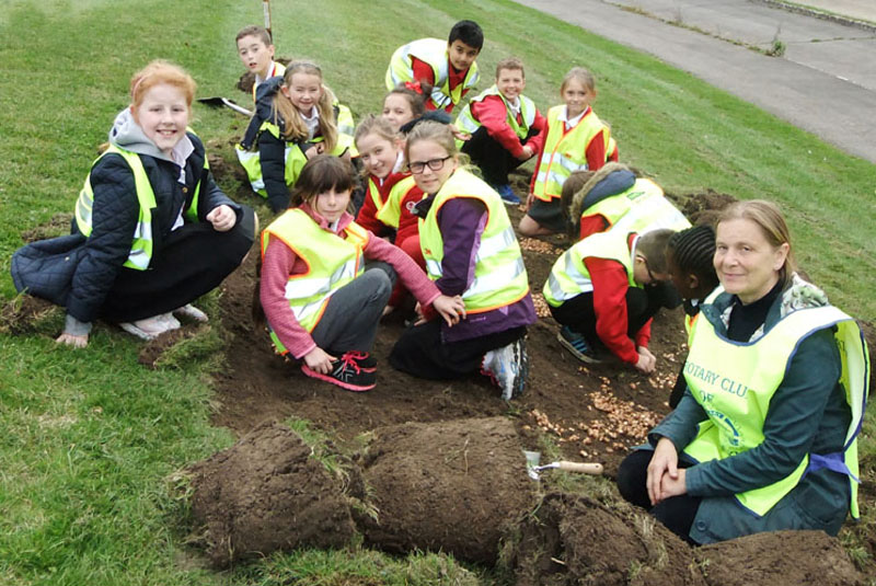 Growing Together to End Polio Now - Purple4Polio Crocus planting at Wildridings Playing Field with Wildridings Primary School