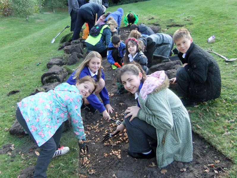 Growing Together to End Polio Now - Purple4Polio Crocus planting at Great Hollands by Wooden Hill School