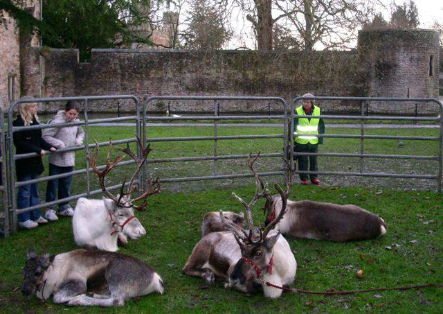 More Reindeer Parade Photos - Reindeer at Bishops Palace Green