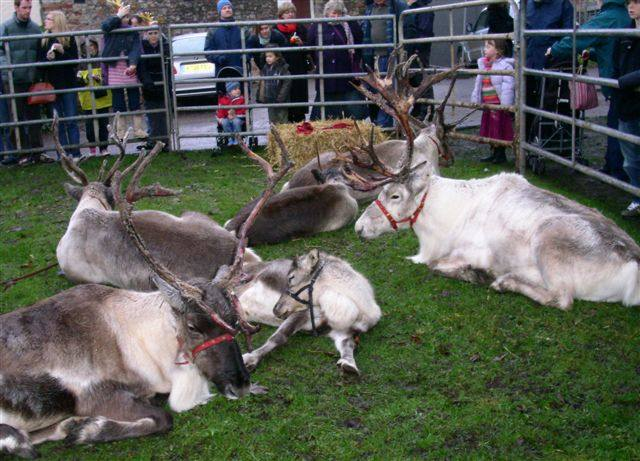 More Reindeer Parade Photos -