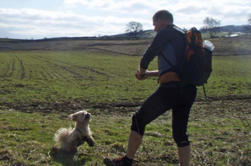 Wensleydale Wander 2013 Report -  Lulu – number 384 – enjoying some fun with her master during the short walk