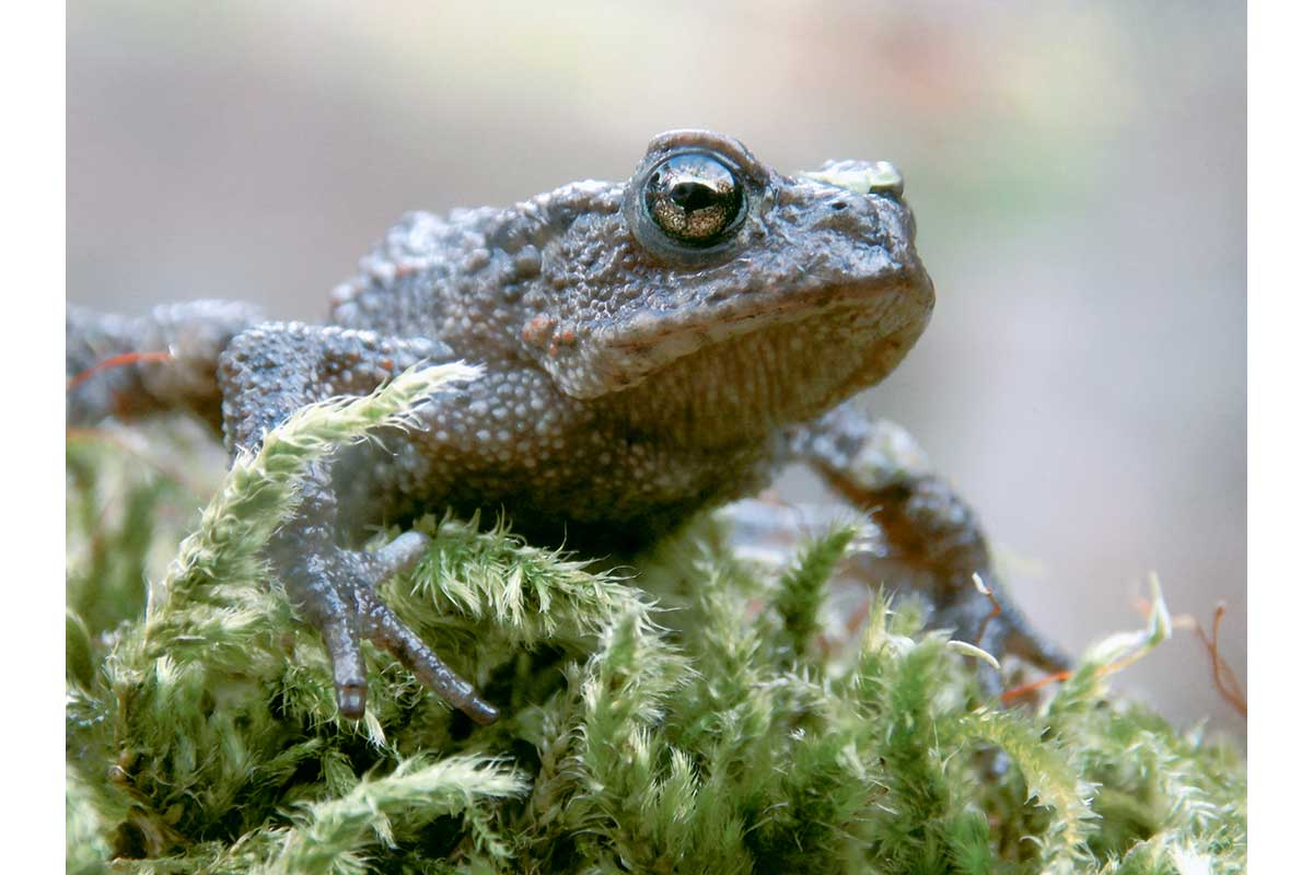 Young Photographers Competition - Toad by Thomas - Commended