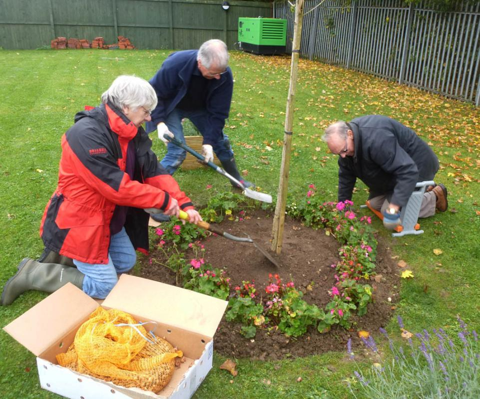 Planting Crocus bulbs at St Andrews Hospice - Planting bulbs around a tree in the garden.
