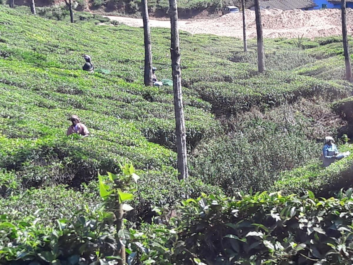 Tour of Kerala, India, 2018 - Tea Plantation