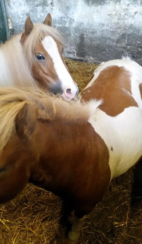 Outside Visit - Equine Pathways - Twiggy and Peanut