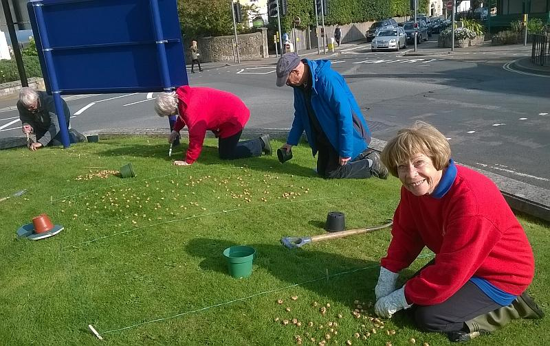 Crocus bulb planting at All Saints Church - Ryde Rotary Club members planting crocus corms at All Saints Church Ryde