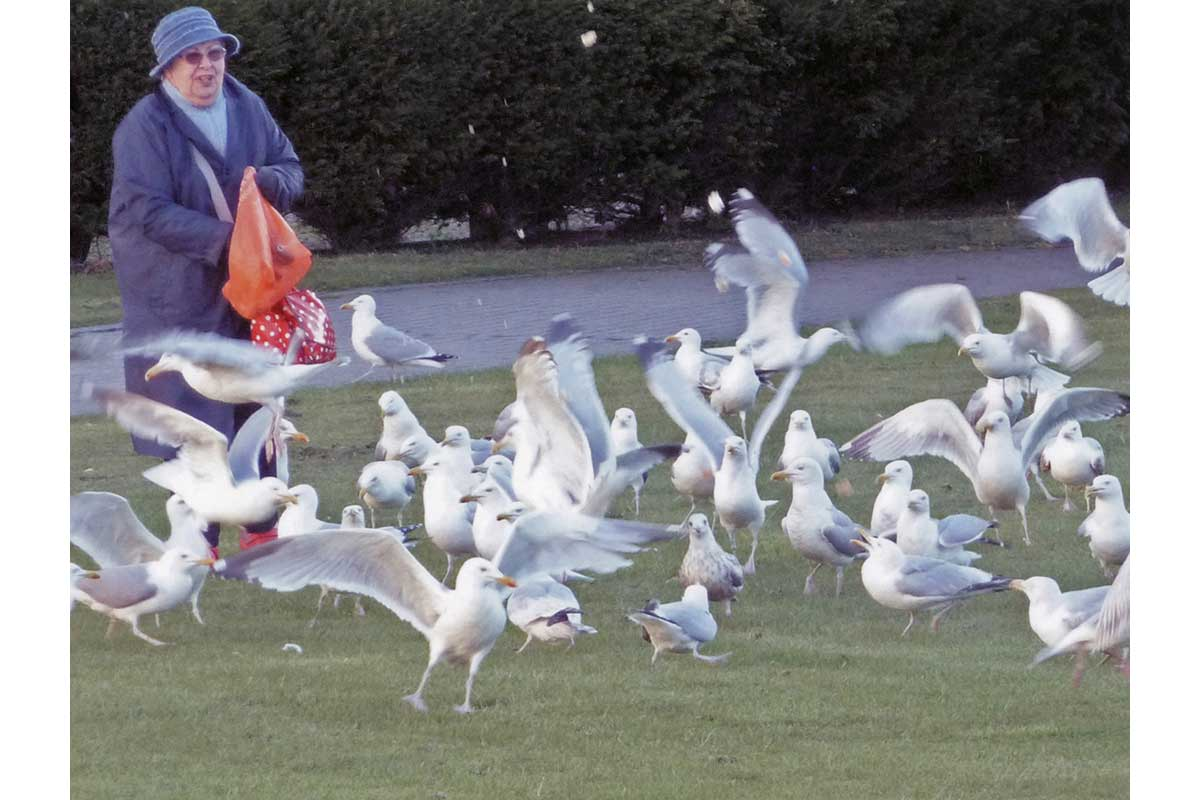 Young Photographers Competition - Feeding The Gulls by Joe - Third Place