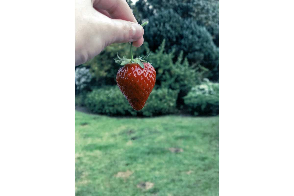 Young Photographers Competition - Strawberry Fields by Jasmine - Commended