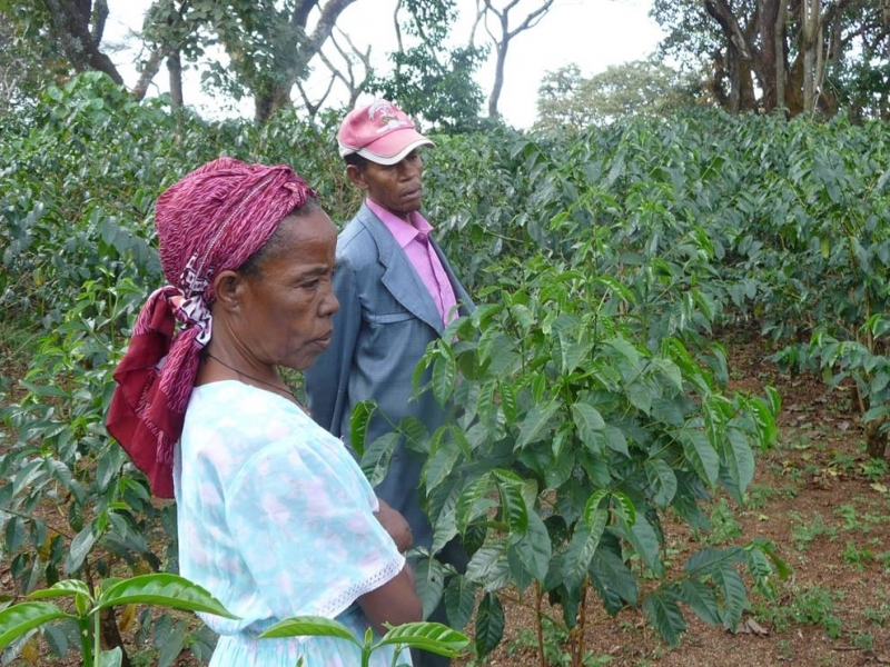 ABOUT Rotary Keswick - This Ethiopian coffee farmer took a loan to improve her coffee bushes to modern high yield varieties. She must wait three years for the first crop.