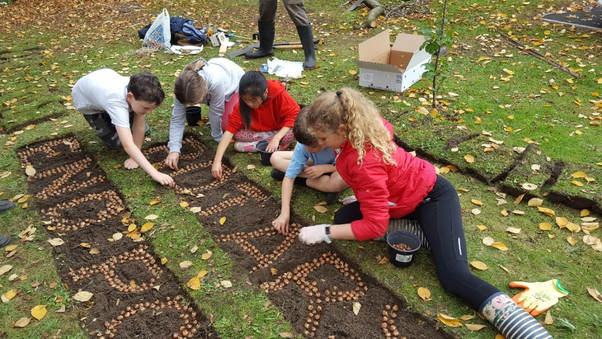 Crocus planting at Charlton Kings Junior School - image(133)