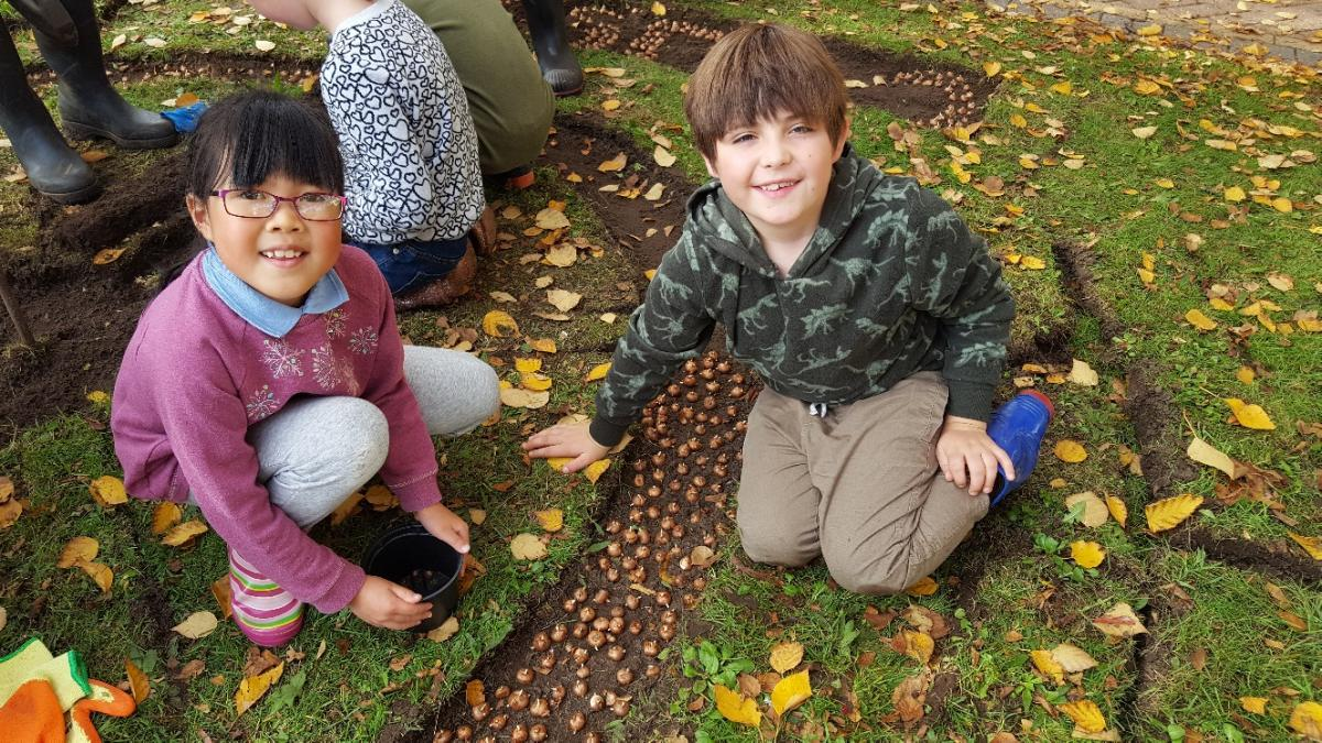 Crocus planting at Charlton Kings Junior School - image(134)