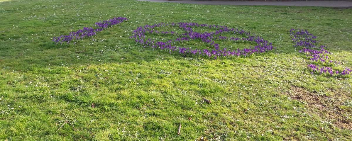 End Polio Now - Sandford Park Crocuses -