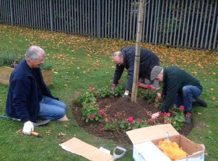Planting Crocus bulbs at St Andrews Hospice - Bulbs were planted inside the geraniums as well as out side.