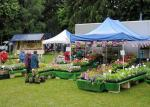 Abergavenny Steam Rally 2012 - A stall selling plants