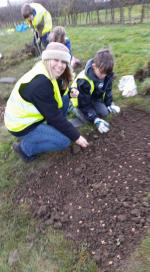 Crocus planting with Forest and Sandridge school - planting the corms