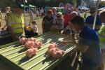 Pig racing at Sonning Show 2019 - Pigs racing, with commentary!