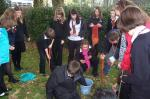 2010 Crocus Planting - Planting at Bodmin College with proposed Interact Club members