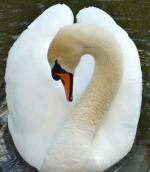 Junior Photographer PHOTOGRAPHS 2012 - Entry A 'Swan Lake' by Rudi