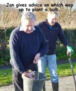 Daffodils - How to plant a bulb