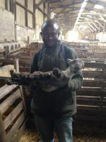 Denis Bannah from Sierra Leone visits Scottish farm - IMG 2060 (480x640)