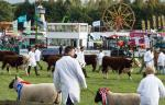 Newbury and Thatcham Rotary Clubs at the Berkshire Show -