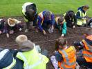 Planting Crocus bulbs at the Town Hall -