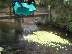 Ball Splash -