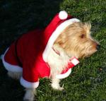 Rotary Fun Run in the park - Santa claws?
