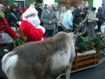 Reindeer Parade Photos -  Reindeer taking a personal interest in Santa!